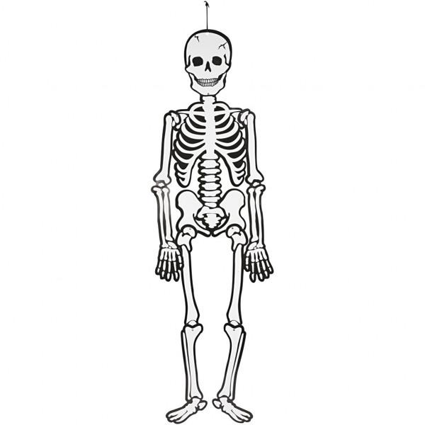 Skelett, leuchtet im Dunkeln, Höhe 120 cm