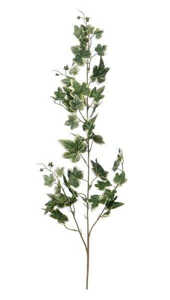 Efeuzweig, grün-weiß, 45 Blatt, 55 cm
