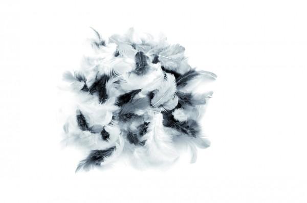 Deco-Federn, 10 gr., weiß-schwarz-grau sortiert