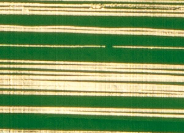 Verzierwachsplatte, gold gestreift, 200x100x0,5mm, grün