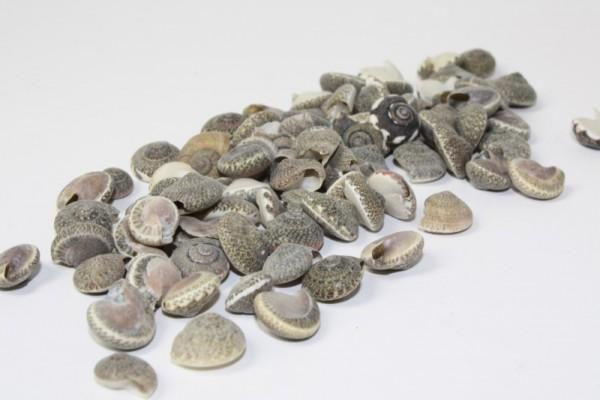 Muscheln, peri shells, ca. 75 g, naturfarben